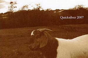quicksilver060607.jpg